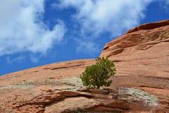 Δέντρο στο βράχο Στοκ εικόνα με δικαίωμα ελεύθερης χρήσης