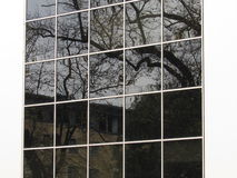 Δέντρο στο γυαλί Στοκ φωτογραφία με δικαίωμα ελεύθερης χρήσης