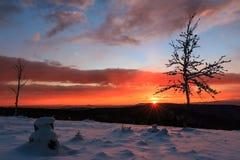 Δέντρο στο ηλιοβασίλεμα Στοκ εικόνα με δικαίωμα ελεύθερης χρήσης