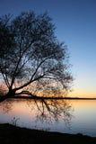 Δέντρο στο ηλιοβασίλεμα Στοκ φωτογραφίες με δικαίωμα ελεύθερης χρήσης