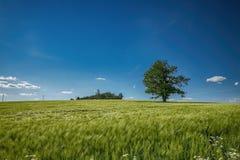 Δέντρο στο θερινό τοπίο Στοκ Εικόνες