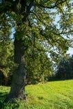Δέντρο στο λιβάδι Στοκ Φωτογραφίες