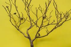 Δέντρο στο κίτρινο υπόβαθρο, οριζόντιο Στοκ εικόνα με δικαίωμα ελεύθερης χρήσης