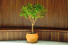 Δέντρο στο κεντρικό ξύλινο σχέδιο στοκ εικόνες