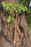 Δέντρο στο κολόβωμα Στοκ εικόνες με δικαίωμα ελεύθερης χρήσης