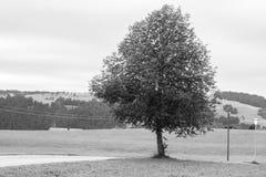 Δέντρο στο κρύο τοπίο Στοκ εικόνα με δικαίωμα ελεύθερης χρήσης
