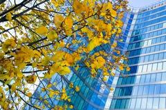 Δέντρο στο κτήριο γραφείων Στοκ εικόνα με δικαίωμα ελεύθερης χρήσης