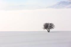 Δέντρο στο μαλακό, ήρεμο περιβάλλον στο χειμώνα Στοκ Εικόνες