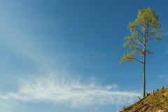 Δέντρο στο μπλε ουρανό. Στοκ εικόνα με δικαίωμα ελεύθερης χρήσης