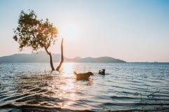 Δέντρο στο νερό με τη θαμπάδα του υποβάθρου σκυλιών και βουνών στη δεξαμενή Sriracha, Chonburi, Ταϊλάνδη Phra κτυπήματος Στοκ Εικόνα