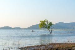 Δέντρο στο νερό με το υπόβαθρο βουνών στη δεξαμενή Sriracha, Chonburi, Ταϊλάνδη Phra κτυπήματος Στοκ φωτογραφία με δικαίωμα ελεύθερης χρήσης