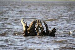 Δέντρο στο νερό Στοκ Εικόνες