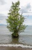 Δέντρο στο νερό Στοκ εικόνες με δικαίωμα ελεύθερης χρήσης