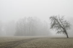 Δέντρο στο ομιχλώδες πάρκο στοκ εικόνες