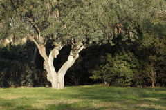 Δέντρο στο πάρκο της Βαλένθια Στοκ Εικόνα