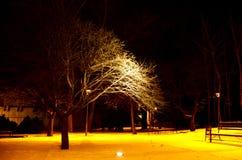 Δέντρο στο πάρκο τη νύχτα Στοκ φωτογραφίες με δικαίωμα ελεύθερης χρήσης