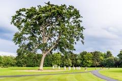 Δέντρο στο πάρκο Cabinteely Στοκ εικόνες με δικαίωμα ελεύθερης χρήσης