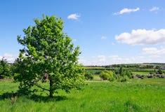 Δέντρο στο πράσινο λιβάδι Στοκ φωτογραφίες με δικαίωμα ελεύθερης χρήσης