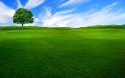 Δέντρο στο πράσινο πεδίο Στοκ Εικόνες