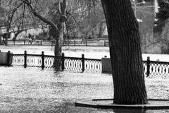 Δέντρο στο πλημμυρισμένο πάρκο την άνοιξη, μονοχρωματικός γραπτός στοκ εικόνες