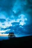 Δέντρο στο σούρουπο ή την αυγή Στοκ φωτογραφία με δικαίωμα ελεύθερης χρήσης