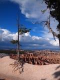 Δέντρο στο φαράγγι 1 του Bryce Στοκ φωτογραφία με δικαίωμα ελεύθερης χρήσης