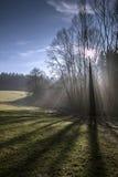 Δέντρο στο φωτισμό contrejour Στοκ φωτογραφία με δικαίωμα ελεύθερης χρήσης