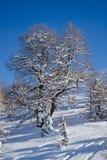 Δέντρο στο χειμώνα στις Άλπεις Στοκ Φωτογραφία