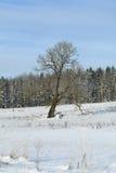 Δέντρο στο χιονώδες πεδίο Στοκ φωτογραφία με δικαίωμα ελεύθερης χρήσης