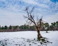 Δέντρο στο χιονώδες τοπίο Στοκ Φωτογραφίες