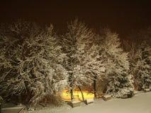 Δέντρο στο χιόνι, αφηρημένο υπόβαθρο, σύσταση των δέντρων που καλύπτονται με το χιόνι τη νύχτα στοκ εικόνα με δικαίωμα ελεύθερης χρήσης