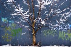 Δέντρο στο χιόνι σε ένα μπλε υπόβαθρο Στοκ φωτογραφία με δικαίωμα ελεύθερης χρήσης