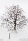 Δέντρο στο χιόνι Στοκ Φωτογραφίες