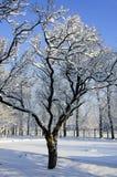 Δέντρο στο χιόνι Στοκ Εικόνες