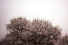Δέντρο στο χιόνι Στοκ φωτογραφία με δικαίωμα ελεύθερης χρήσης