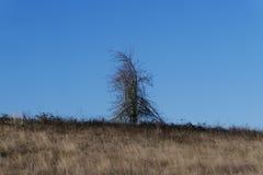 Δέντρο στο Όρεγκον Στοκ Εικόνες