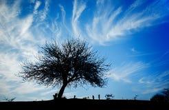 Δέντρο στο λόφο Στοκ φωτογραφίες με δικαίωμα ελεύθερης χρήσης