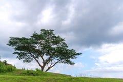 Δέντρο στο λόφο Στοκ Εικόνες