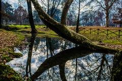 Δέντρο στο ύδωρ Στοκ φωτογραφία με δικαίωμα ελεύθερης χρήσης