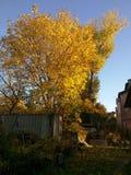 Δέντρο στο autmn Στοκ Εικόνα