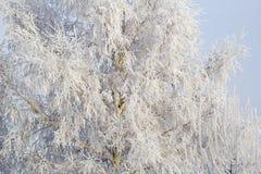 Δέντρο στο hoarfrost Στοκ Εικόνες