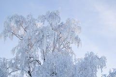 Δέντρο στο hoarfrost Στοκ εικόνα με δικαίωμα ελεύθερης χρήσης