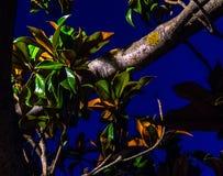 Δέντρο στο parque grande σε Σαραγόσα τη νύχτα Στοκ φωτογραφία με δικαίωμα ελεύθερης χρήσης