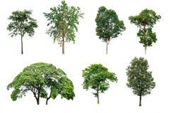 Δέντρο συλλογής στο άσπρο υπόβαθρο Στοκ φωτογραφία με δικαίωμα ελεύθερης χρήσης