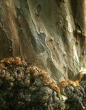 δέντρο συστάσεων φλοιών Στοκ φωτογραφία με δικαίωμα ελεύθερης χρήσης