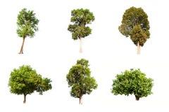Δέντρο συλλογής που απομονώνεται στο άσπρο υπόβαθρο Στοκ φωτογραφίες με δικαίωμα ελεύθερης χρήσης