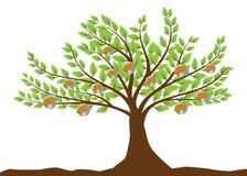 δέντρο σφαιρών καρπών ελεύθερη απεικόνιση δικαιώματος