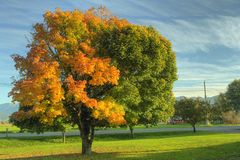 δέντρο σφενδάμνου πτώσης φθινοπώρου Στοκ φωτογραφία με δικαίωμα ελεύθερης χρήσης