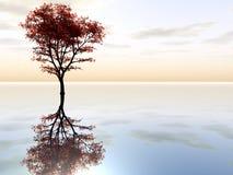 Δέντρο σφενδάμνου Στοκ εικόνες με δικαίωμα ελεύθερης χρήσης