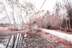 Δέντρο σύκων, καλλιτεχνικά χρώματα της φύσης Στοκ εικόνα με δικαίωμα ελεύθερης χρήσης